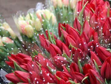 Тюльпаны на 8 Марта. Дешево!!!