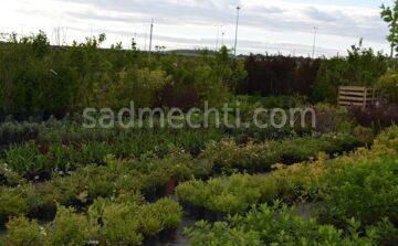 Сад Вашей Мечты 2