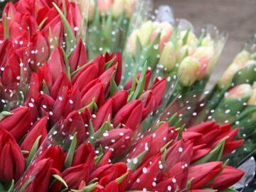Тюльпаны на 8 Марта. Дешево!!! 1